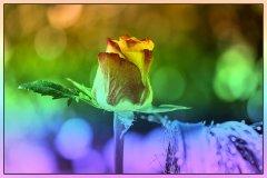 kuenstlerisch regenbogen verlauf